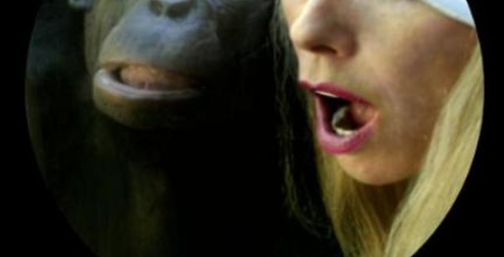 The Bonobo Way: The Evolution of Peace Through Pleasure, November 18th @ Erotic Heritage Museum